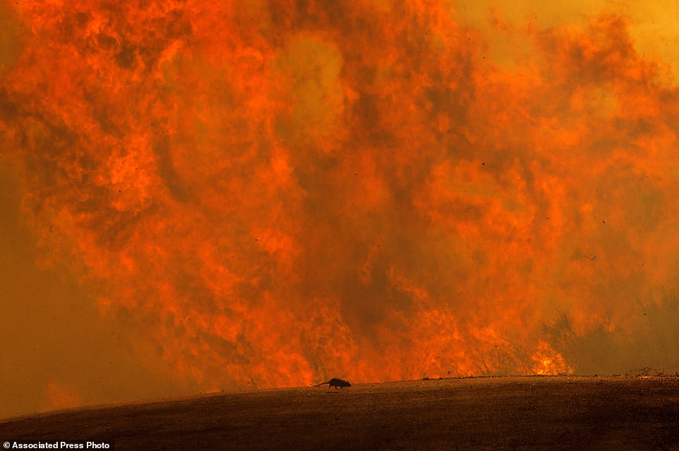 Wildfire Ravage California, Thousands of People Evacuated (Photos)