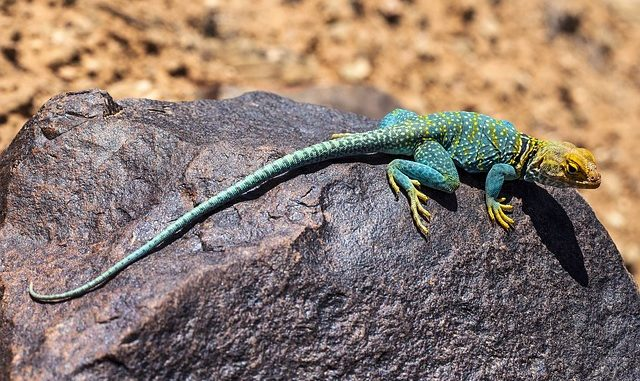 Spiritual Meaning Of Lizard In The Dream