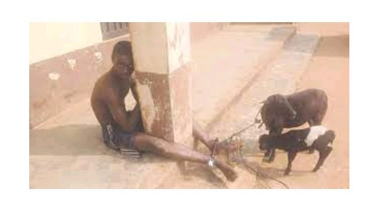 It Gives Me Great Pleasure Whenever I Have s*x with Goats – 15-Year-Old boy Confesses