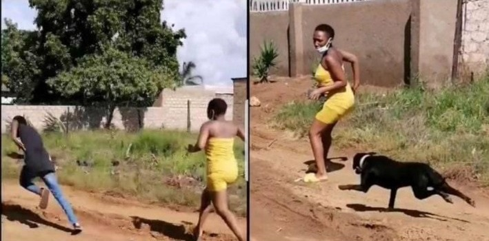 Laugh No Go Kill Me: See As Young Man Ran Away Leaving His Girlfriend To Be Attacked By A Dog